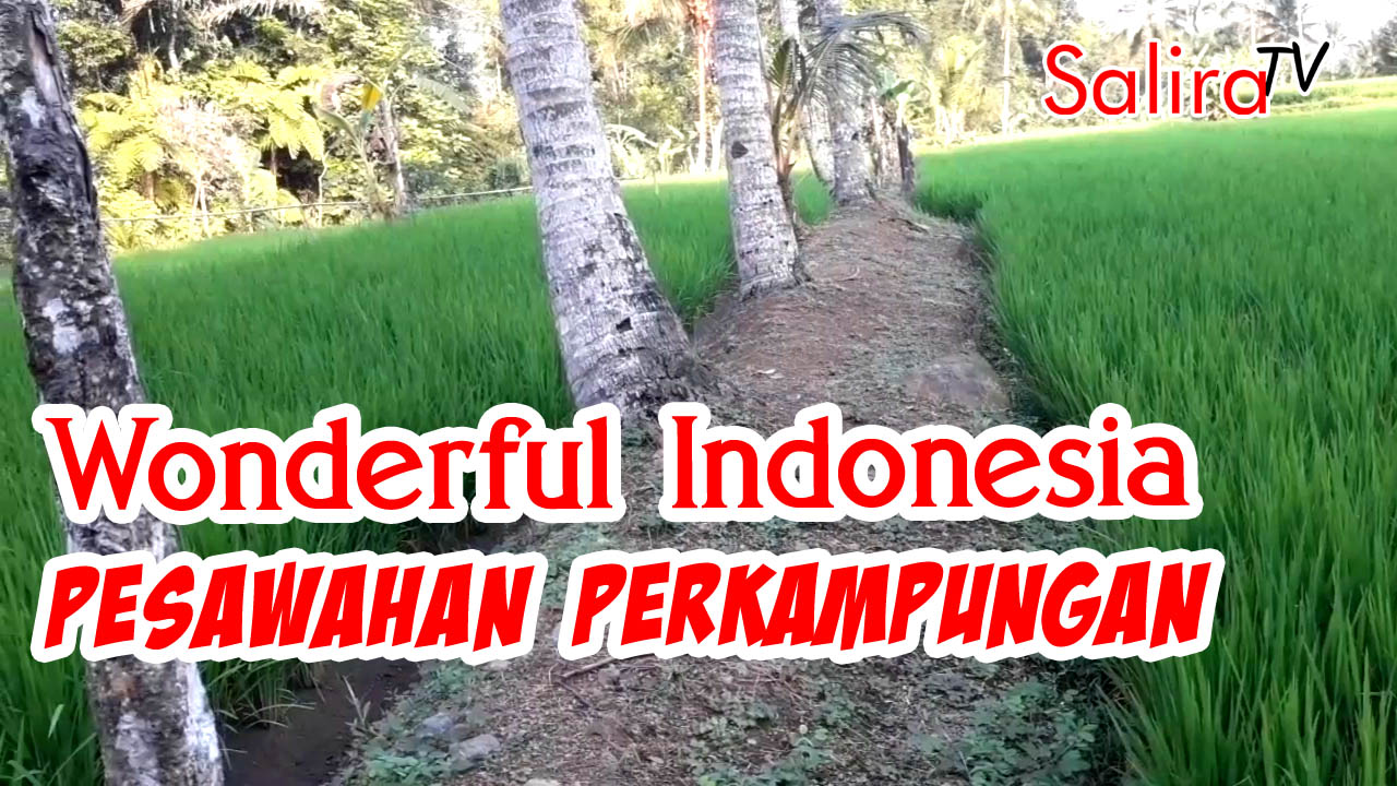 Wonderful Indonesia – Rice Field in Indonesian Village